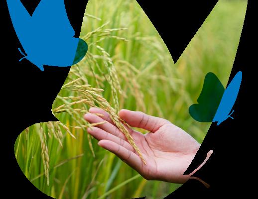 Ebro Talent, un programa para promover proyectos innovadores en el sector alimentario